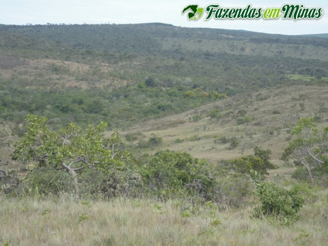 Fazenda para pecuária, reflorestamento e energia fotovoltaica.