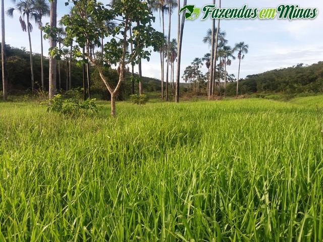 Fazenda para silvicultura